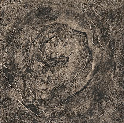 fossile6