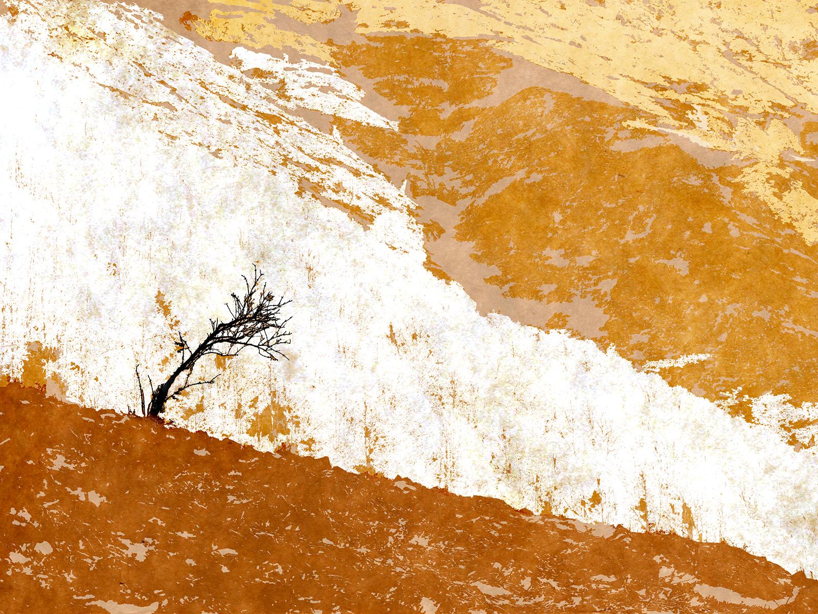 arbre_montagne